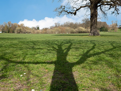 Shadow of tree in South Hill Park