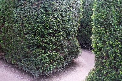 I took this photo while lost in the Maze. It is actually quite confusing. I entered twice and each time eventually found my way back to the same entrance. I never reached the center or the opposite exit!