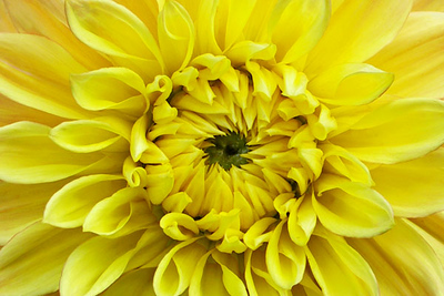 Flower at Chatsworth