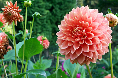 Flowers at Chatsworth