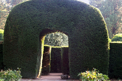 Entrance to the Maze. The Maze was developed by Dennis Fisher in 1962 on the site of the old Paxton Conservatory. It contains 1209 English yews. In the middle (which I never reached) is a pear tree.