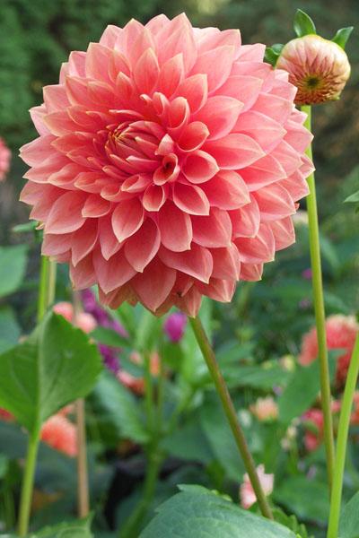 In a Chatsworth Garden