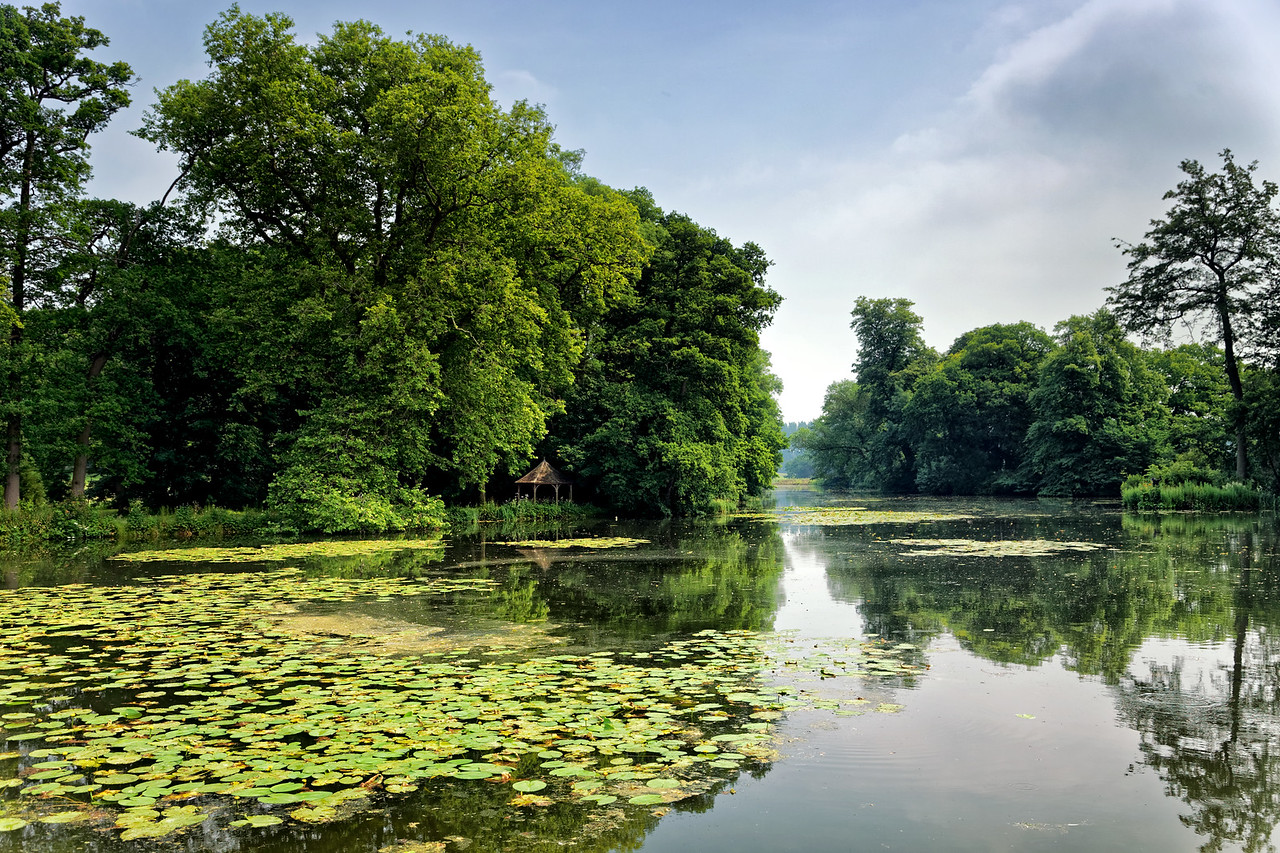 Summer on the lake, Oxfordshire