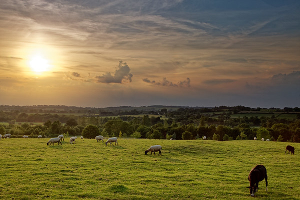 Sheep farming created the wealth of the English Cotswolds