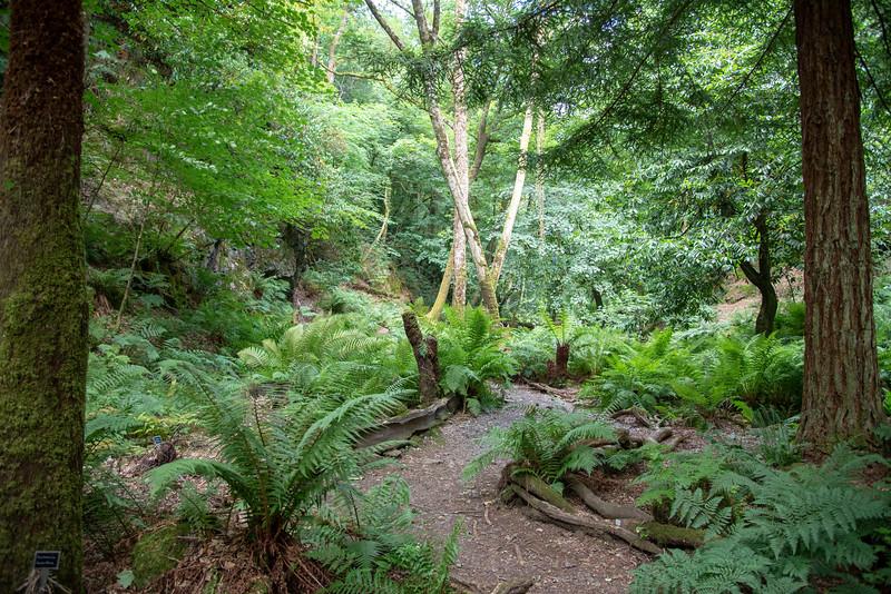 canonteign falls fern garden