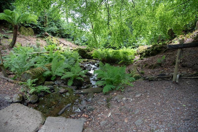 victorian fern garden canonteign falls