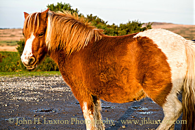 Dartmoor Ponies, Dunnabridge, Dartmoor, Devon - October 26, 2017