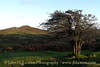 Sharp Tor, near Dartmoor, Dartmoor. Evening photograph - October 23, 2013