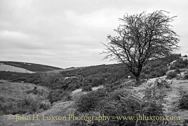 Bovey Valley - near East Bovey Head - October 28, 2016