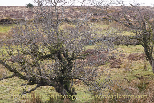 Warren House Inn, Postbridge, Dartmoor, Devon - March 27, 2018