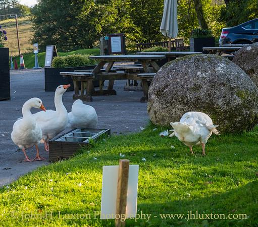 Two Bridges Hotel, Dartmoor  - September 09, 2020