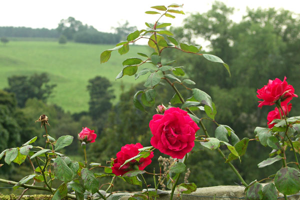 Haddon Hall, closeup of flowers with view from garden