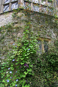 Closeup of Haddon Hall. Most of the walls are trellised with flowers (mostly hanging clematis and roses), at least from spring to autumn. I was there in mid-September.