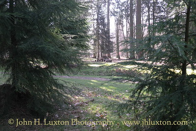 Rhinefield Plantation, New Forest, Near Lyndhurst, Hampshire. April 03, 2012