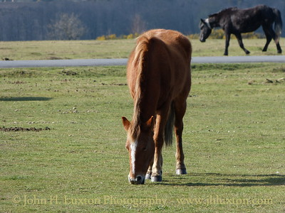New Forest Ponies, New Forest, Hampshire. April 03, 2012