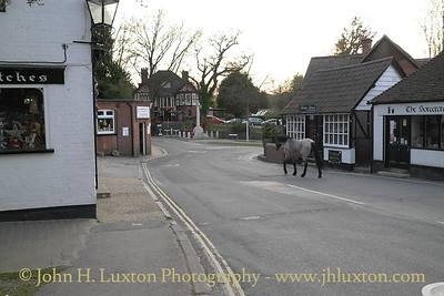 Burley Village, New Forest, Hampshire - April 02, 2012