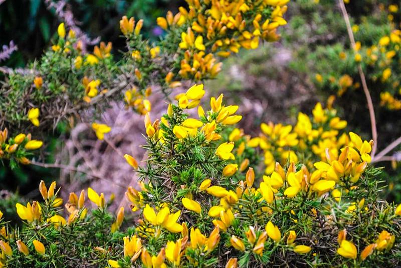 ilkley moor floral beauty