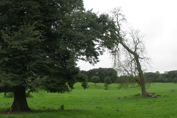 View from the road of Jane Austen's birthplace