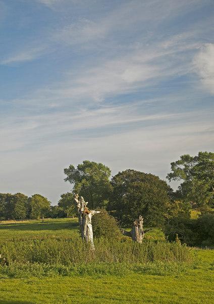 Farmland around Branston Hall