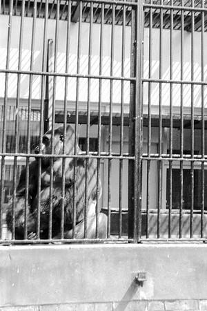 1961 London Zoo