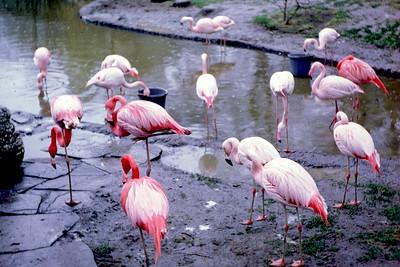 1970-03-31 London Zoo