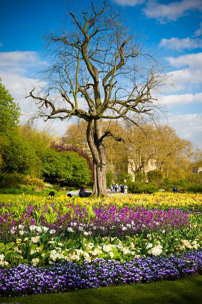 Spring flowers in Hyde Park
