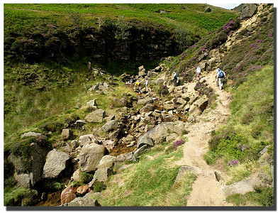 797_J7263373-UK : Pathway up Brinds Brook, Edale, Derbyshire; July.