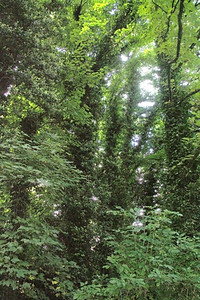 The lush green growth reminds me of a rain forest.
