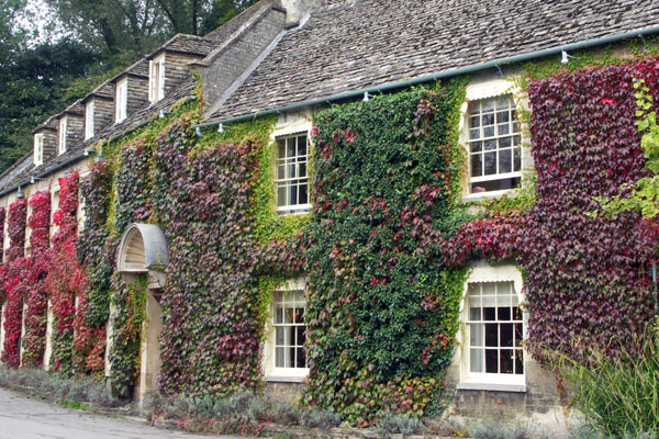 In the center of Bibury, as in many Cotswold villages, are many buildings covered with Virginia Creeper or ivy.