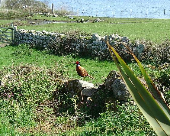 Tresco, Isles of Scilly - April 16, 2001