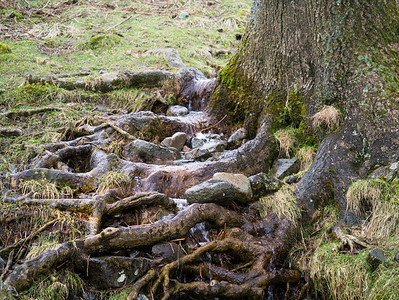 Water running over tree roots