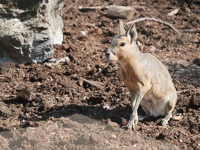 Longleat Safari Park