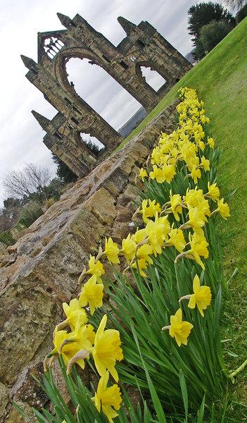 Guisborough Abbey