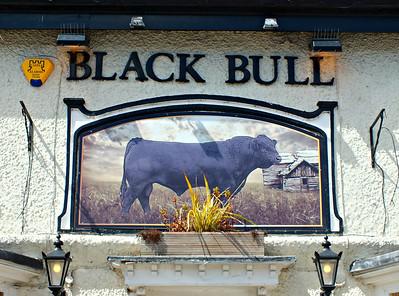 Black Bull - Archive