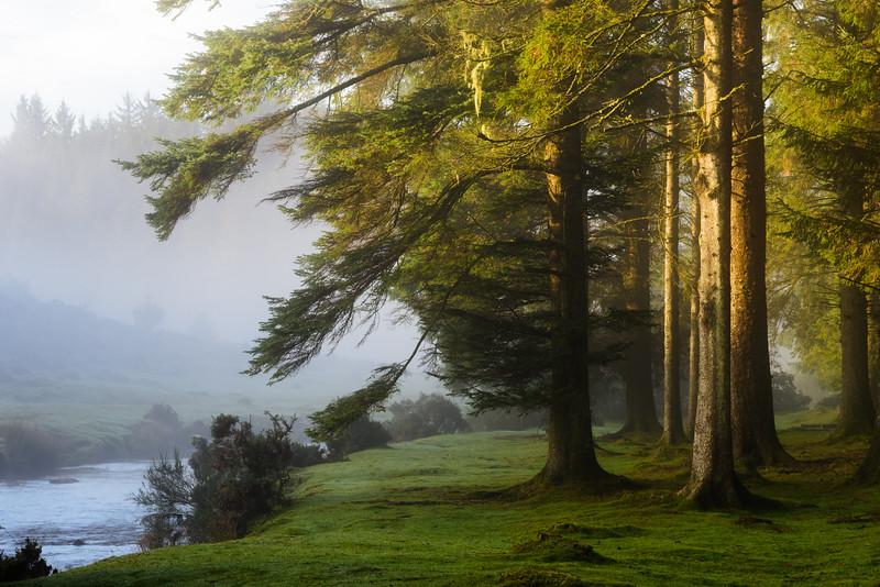 Bellever Wood