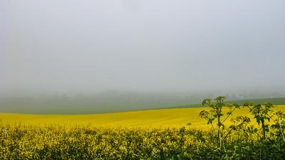 Cornflower Mist