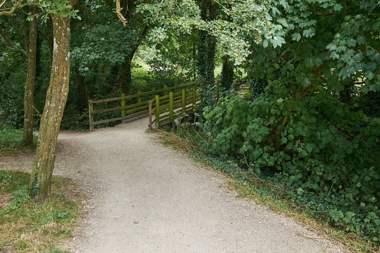 A Bridge in Dorset