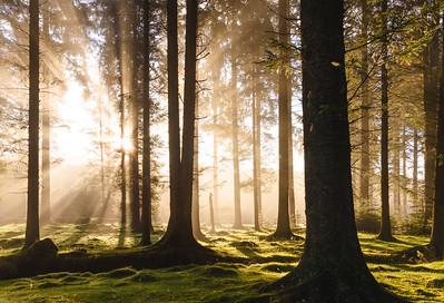 Bellever Wood Fog
