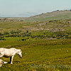 Horse on Dartmoor