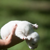 Male white pup-5
