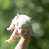 Male white pup-1
