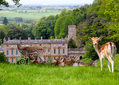 British Country Houses & Castles
