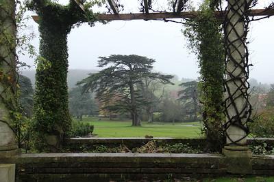 Statuesque cedar, West Dean Gardens