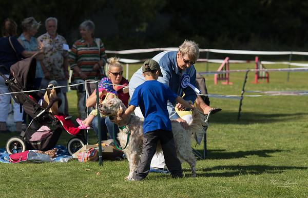 English Setter Association Fun Day Dog Show