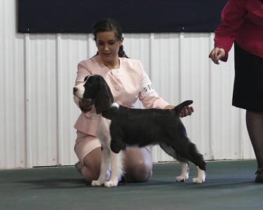 Cedarwood dogs at TCVESSA 2009