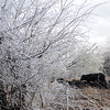 Ice covered trees and fallen branches glisten in the sun as a herd of cattle seek relief from the cold wind Wednesday, April 10, 2013. Area farmers and ranchers are assessing the damage to the wheat and canola crops and their livestock after yesterday's spring storm brought sleet and freezing rain to Oklahoma. (Staff Photo by BONNIE VCULEK)