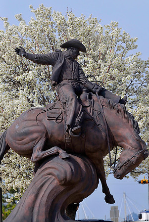 A blooming pear tree provides a backdrop for the Ranger statue at NWOSU-Enid Monday. (Staff Photo by BILLY HEFTON)