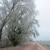 Sleet falls as ice covered branches of several trees crackle and pop in the high wind Wednesday, April 10, 2013. O.G.& E. line crews were busy repairing downed service lines across Enid and surrounding rural areas throughout the day. (Staff Photo by BONNIE VCULEK)