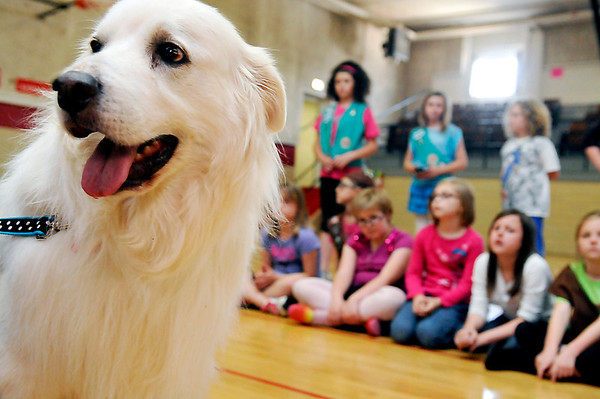 Peyton, a former rescue dog from the Enid SPCA paid a visit to Girl Scout Troop 211 at Chisholm Elementary Monday. The troop raised $1,000 that they donated to the Enid SPCA. (Staff Photo by BILLY HEFTON)