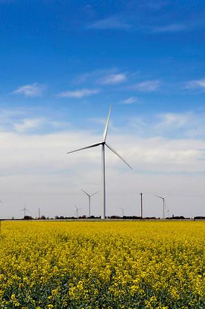 A canola field blooms under wind turbines near Hunter Saturday. (Staff Photo by BILLY HEFTON)